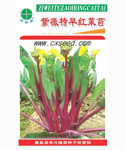 紫薇特早40红菜苔