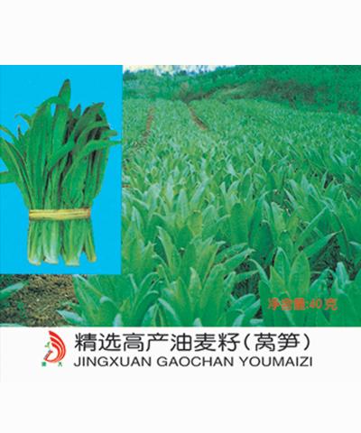 远大精选高产油麦籽(莴笋) 40g