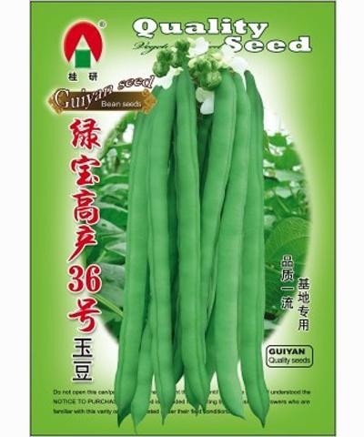 绿宝高产36号玉豆