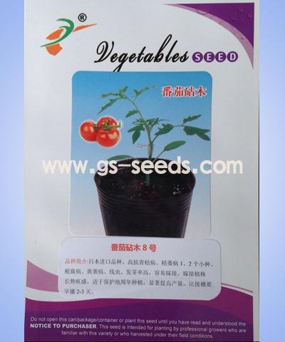 番茄砧木8号