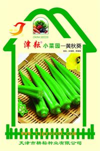 黄秋葵小菜园