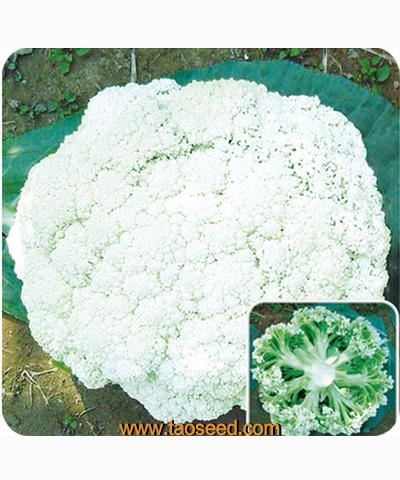青梗绿花椰菜