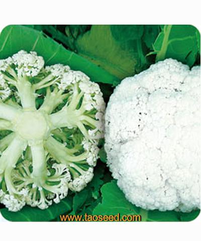 玛丽亚花椰菜