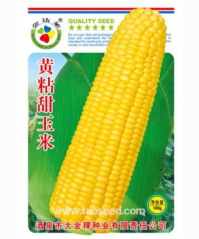 黄粘甜玉米
