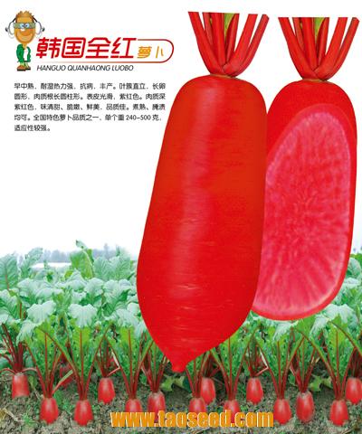 韩国全红萝卜