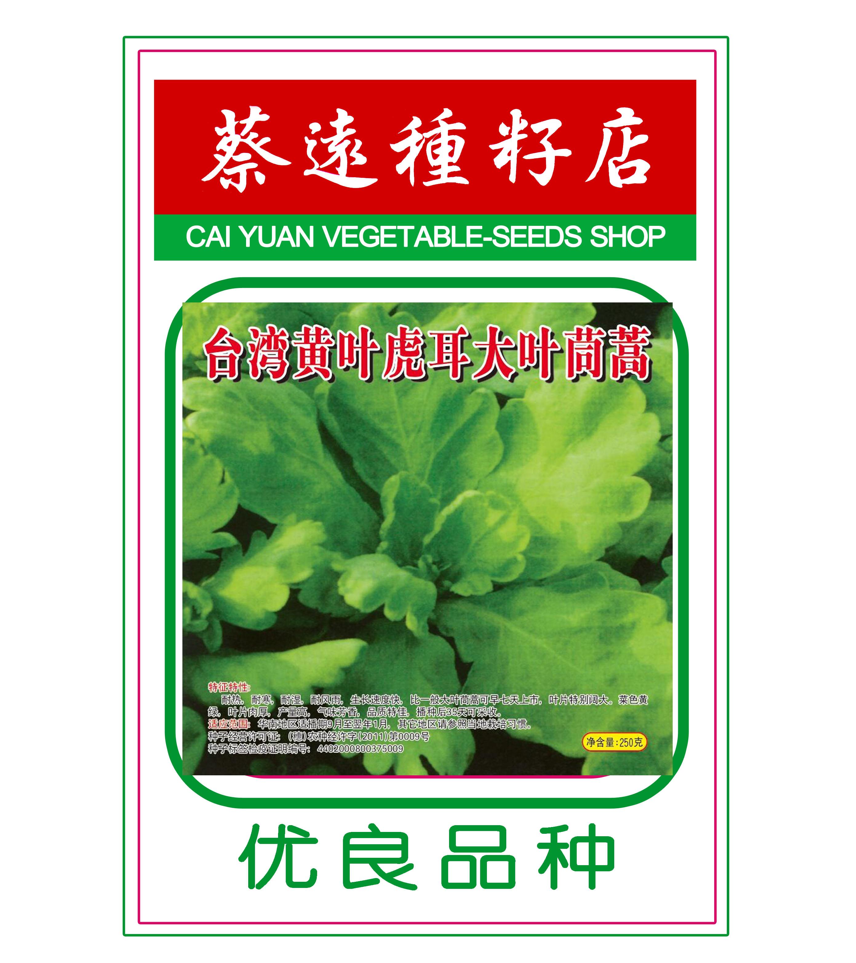 台湾黄叶虎耳大叶茼蒿250g