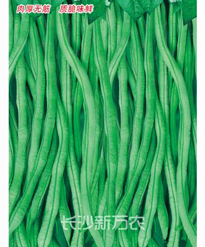 农园架豆王