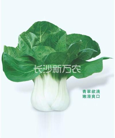 白雅白梗菜