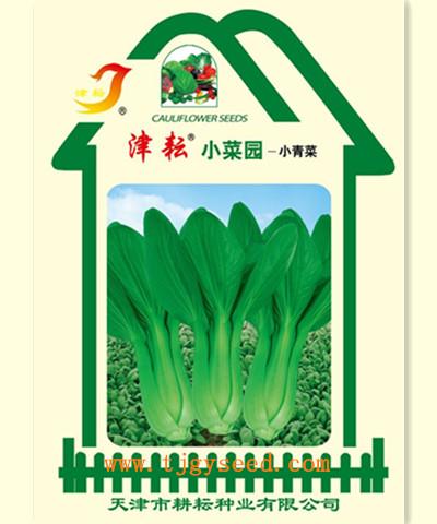 津耘小菜园-小青菜