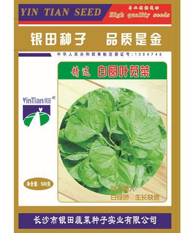 精选白圆叶苋菜