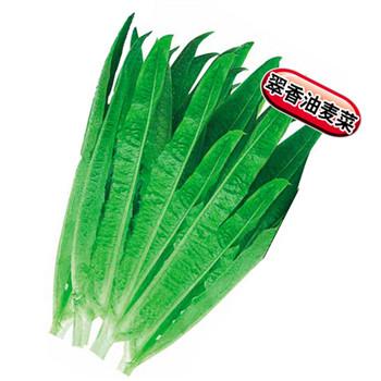 翠香油麦菜