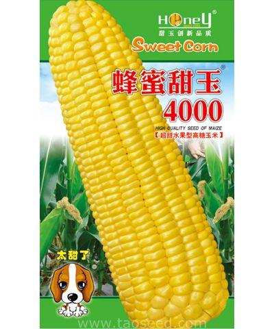蜂蜜甜玉4000