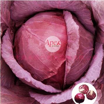 红王朝—紫甘蓝种子耐寒耐热均匀耐采收紫红色甘蓝