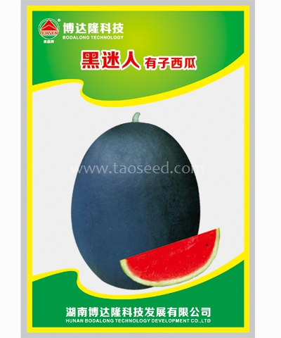 黑迷人有籽西瓜