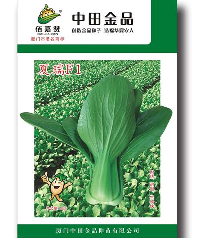 夏瑞青梗菜 20g/包