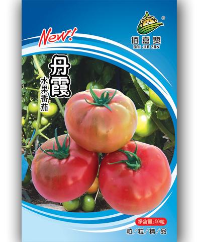 丹霞水果番茄  50粒/包