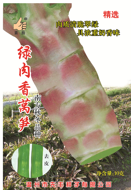 绿肉香莴笋