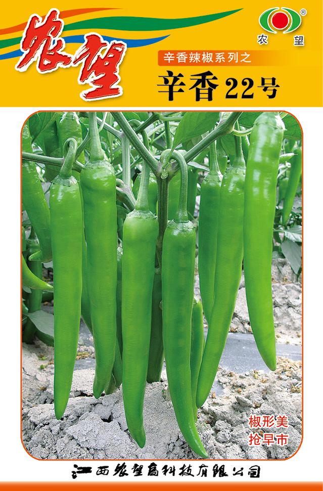 辛香22号