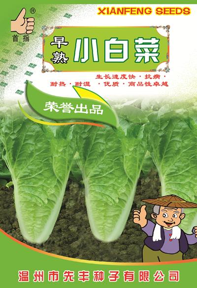 早熟小白菜