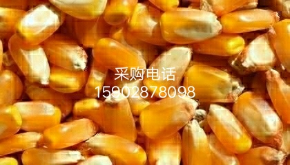成都声誉酿酒公司采购进口大米碎米