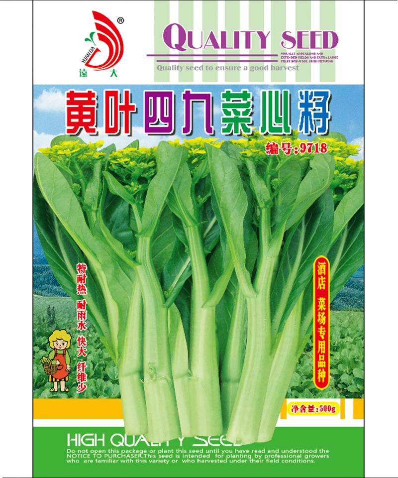 黄叶四九菜心籽500g