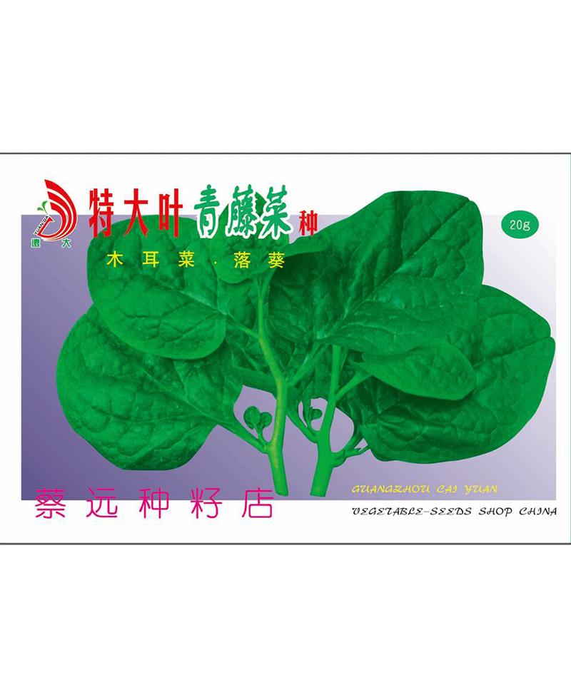 特大叶青藤菜种20g