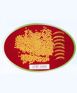 吉林小粒7号--大豆、黄豆