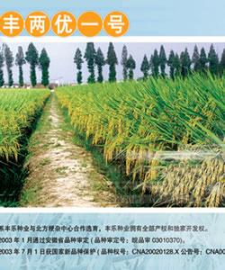 丰两优一号--水稻