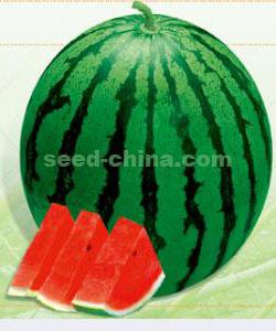 昂达甜王二号-西瓜