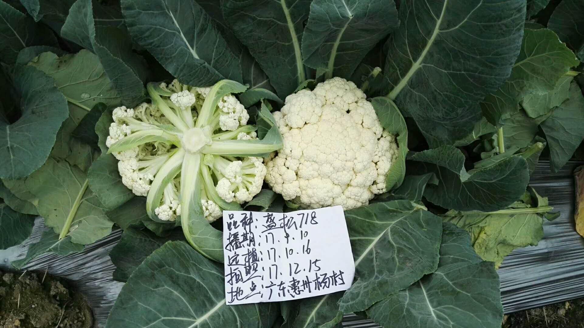 广东惠州盛松718